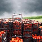 food supply chain RQ